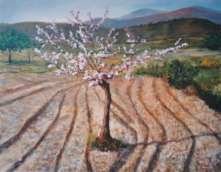 Almondtree In Ploughed Field